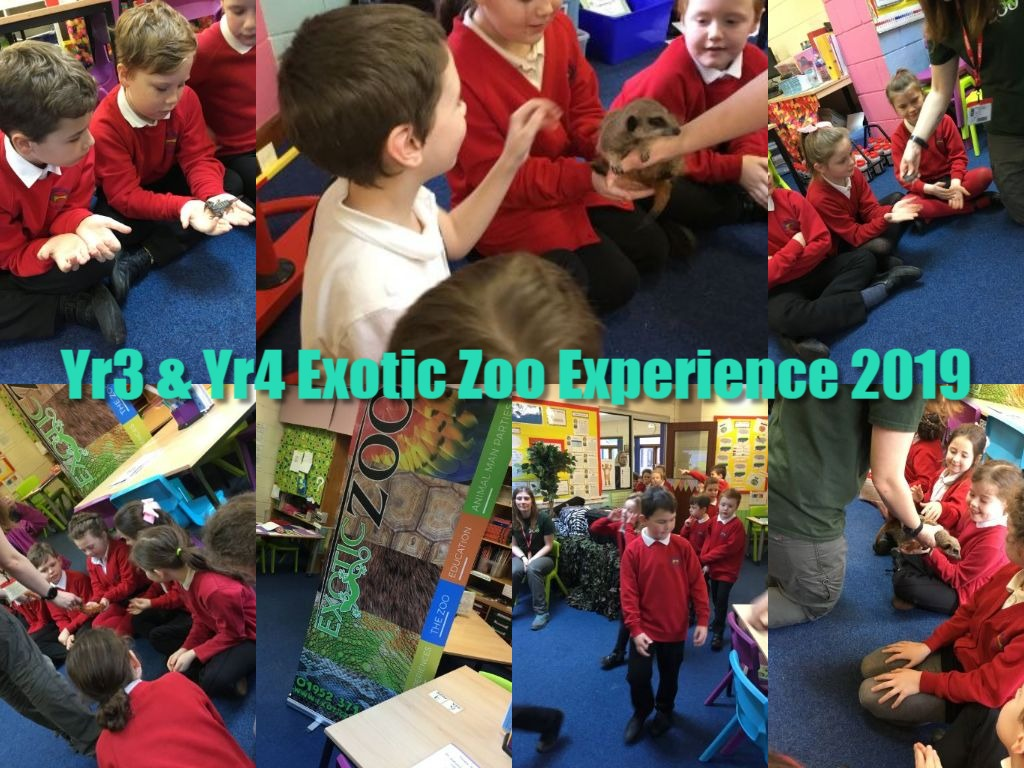 Y3 and 4 exotic zoo experience 2019.jpg